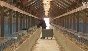 Była wielka burza o zakazie hodowli zwierząt futerkowych. Oto, co po niej zostało