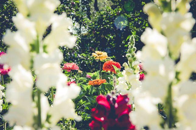 Ogród ekologiczny. Jak go zaaranżować?