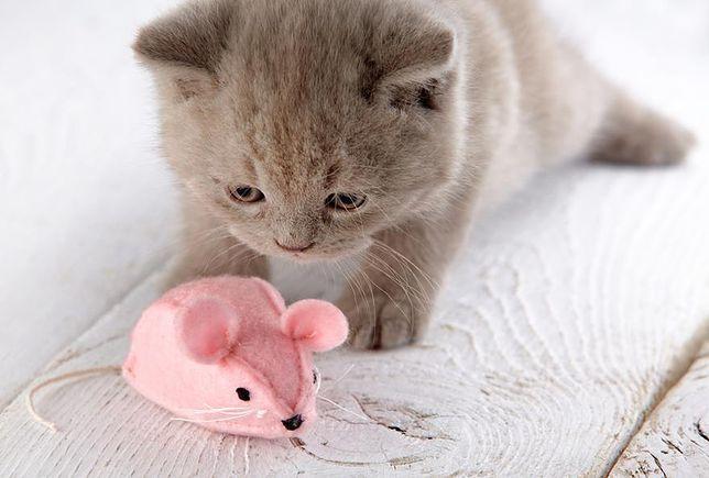 ładny kot