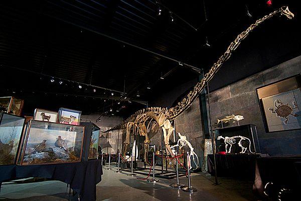 Szkielet został sprzedany za kwotę 400 tys. funtów.