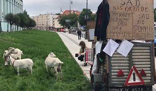 """Kozy protestują przed Sądem Najwyższym. """"Sąd nas okradł"""""""