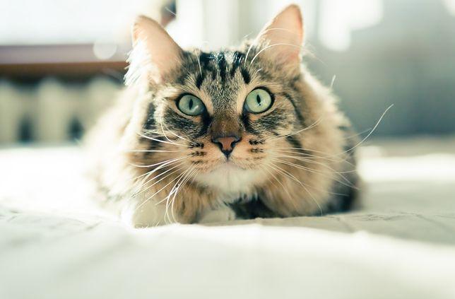 Koty drapiąc powierzchnie, oznaczają teren
