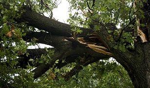 """Przewrócone drzewo na Koszykowej. """"Ruch całkowicie zablokowany"""""""