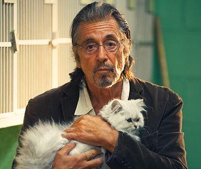 """""""Manglehorn"""" z Alem Pacino w roli głównej to jeden z wielu filmów, w którym grały zwierzęta Sida Yosta"""