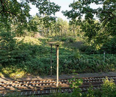 Okolice torów kolejowych w pobliżu 65. kilometra trasy łączącej Wrocław z Wałbrzychem