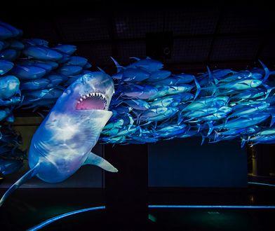 O żarłaczu mówi się, że to śmietnik w oceanie, ponieważ potrafi zjeść niemal wszystko, co napotka na swojej drodze