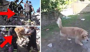 Pies uratowany 9 dni po trzęsieniu ziemi we Włoszech
