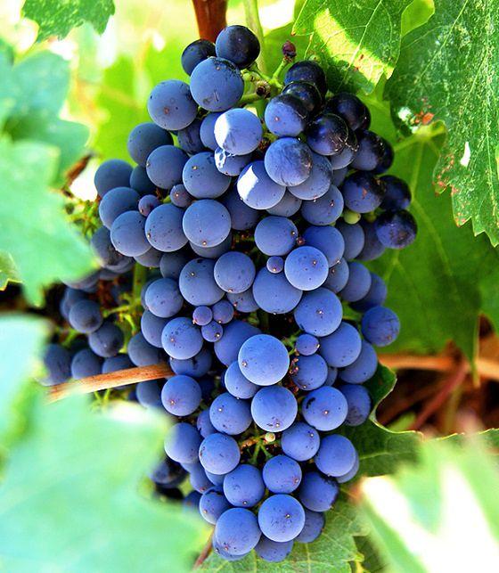 Resweratrol, czyli winogronowy następca retinolu i witaminy C