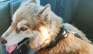 Jeden z funkcjonariuszy przygarnął porzuconego psa