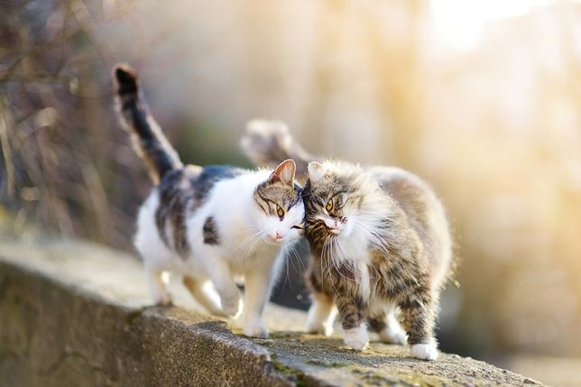 Two friendly cats on spring