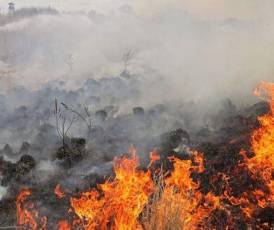 Ogień w Biebrzańskim Parku Narodowym. To jeden z największych skarbów polskiej przyrody