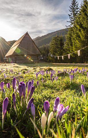 Dolina Chochołowska należy do najpiękniejszych w Tatrach