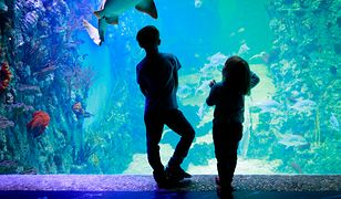 Oceanarium w Kołobrzegu to miejsce, w którym dzieci mogą uczyć się o morskim świecie