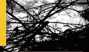 Filozofia wobec zła. Od spekulacji do transgresji. Philosophy and Evil. From Speculation to Transgression