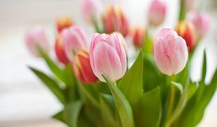 Dzień Matki 2019 - życzenia z okazji Dnia Mamy.