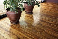Podłoga z litego drewna. Jak dokonać najlepszego wyboru?