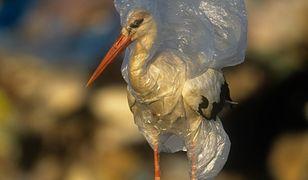 Dzień Ziemi. Zatruwamy morza i oceany 10 milionami ton plastiku i zużywamy bilion foliówek