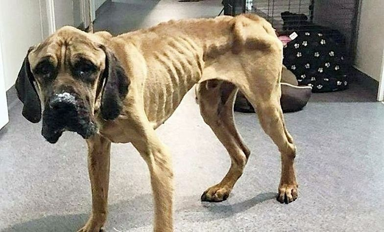 Zagłodziła psy niemal na śmierć. Zasłaniała się brakiem pieniędzy na karmę