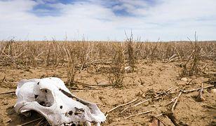 Naukowcy alarmują: na skutek zmian klimatu zniknie wiele roślin i zwierząt