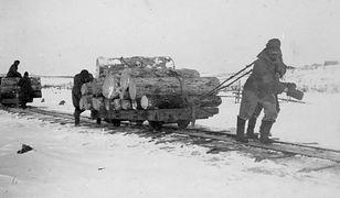 Zesłańcy transportują drewno na Sachalinie