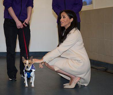 Meghan podczas odwiedzin w siedzibie Mayhew Animal Home w Londynie