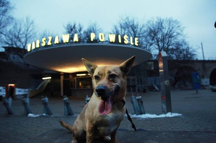 Czworonogi na tle najbardziej znanych miejsc w Warszawie. Wyjątkowa, psia wystawa