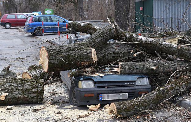 Trzy osoby ranne, strażacy interweniowali ok. 1400 razy. Wichury nad Polską