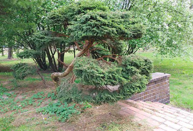 Warszawa. Mieszkańcy nie chcą pogodzić się z planami sprzedaży parku przy Narodowym Instytucie Geriatrii pod budowę osiedla. Liczą, że minister zdrowia, jako zarządca placówki, pomoże zapobiec takiej transakcji