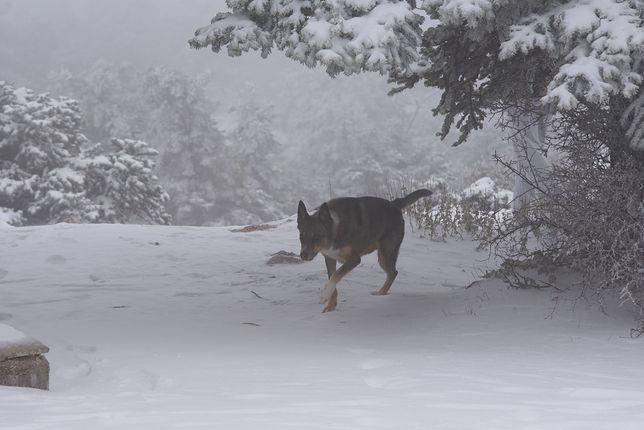 Po polskich lasach może wałęsać się nawet kilka tysięcy psów