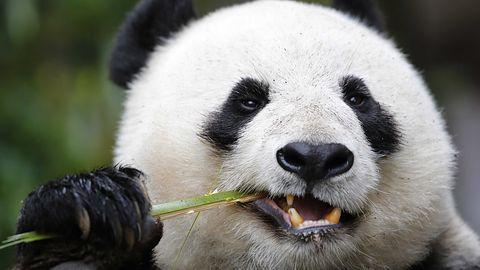 Panda testuje Global Protection 2015 – interfejs Modern, nowy silnik i ochrona plików osobistych