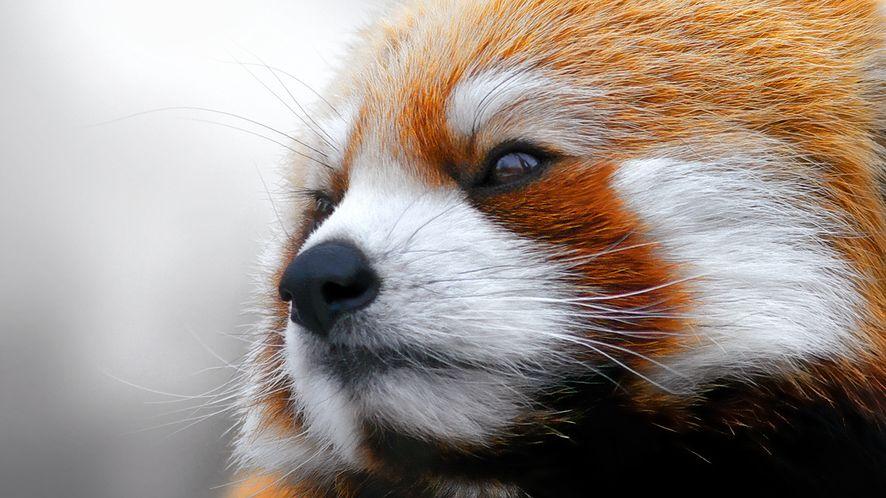 Mozilla eksperymentuje z opcjami wyszukiwarki w Firefoksie