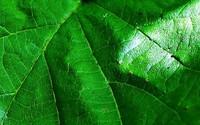 Edukacja ekologiczna - nabór wniosków