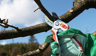Wiosenne prace w ogrodzie - które krzewy wymagają przycięcia