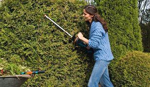 Majowe prace w ogrodzie: przycinanie krzewów, odchwaszczanie