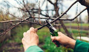 Porządki w ogrodzie przed nadejściem wiosny. Co warto zrobić w marcu?