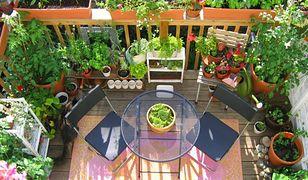 Zielone oazy w mieście. Dekoracyjne balkony i tarasy