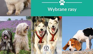 Expert. Psy - wybrane rasy. Encyklopedia