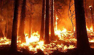 Pożar na wyspie Hvar. Chorwaci zmagają się z kolejnym żywiołem