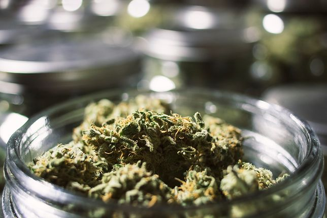 W Sklepie Play jest kilka aplikacji oferujących dostarczenie marihuany