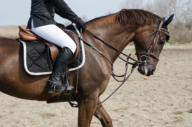 Jeździectwo - co należy wiedzieć o jeździe konnej?