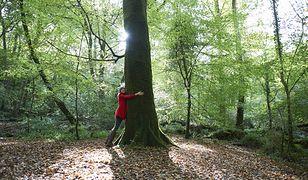 Tulenie drzew pomaga w walce z izolacją (zdjęcie ilustracyjne)