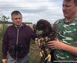 Policjant z Dolnego Śląska uratował zwierzę, które jest w Polsce bardzo rzadkie