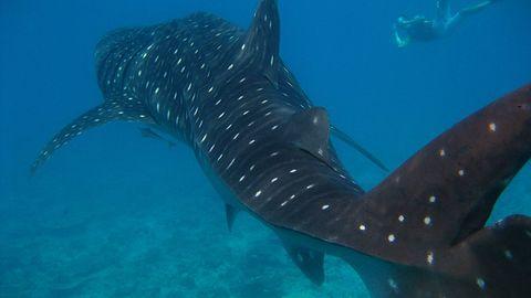 Drony i sztuczna inteligencja będą ratować ludzi przed rekinami