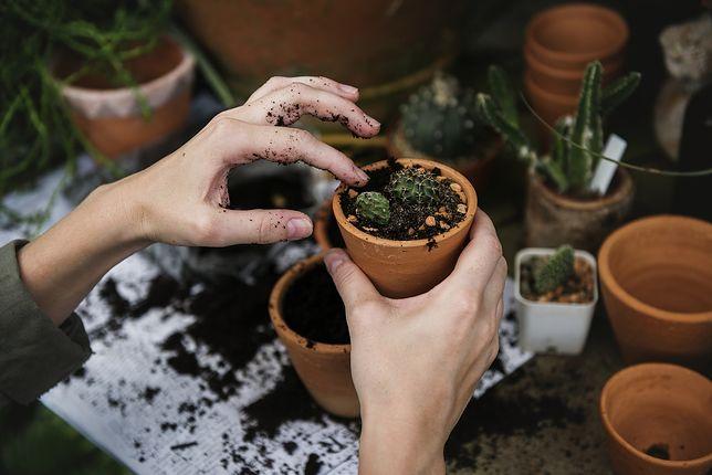 Taras w bloku powinien mieć rośliny