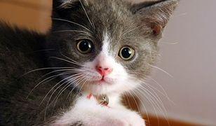 Otwarta Sobota w Centrum Adopcyjnym Straży dla Zwierząt