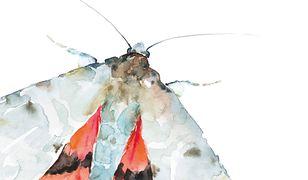 Sennik ciem i motyli