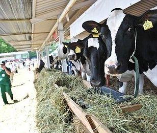 Producenci mleka się cieszą. Dostaną 29 milionów euro