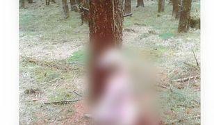 Psa powieszono na drzewie na bardzo krótkim sznurku