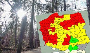 Zagrożenie pożarowe w lasach. W niektórych miejscach jest już ekstremalne sucho