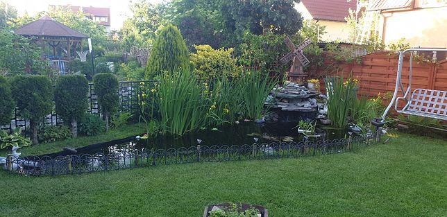 Pan Norbert korzysta z wody w oczku także do podlewania ogrodu.